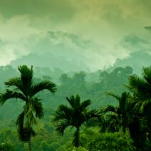 Big Data is Saving the Biodiversity of Tropical Rainforests